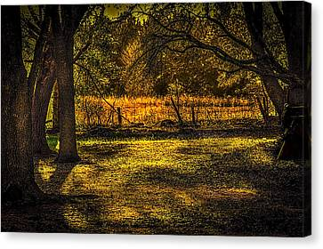 Look Into The Golden Light Canvas Print by Marvin Spates
