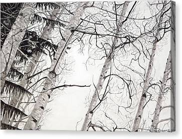 Looking Up 1 Canvas Print by Joyce Blank