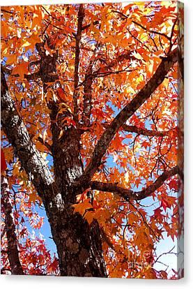 Looking Up Canvas Print by Barbara Shallue