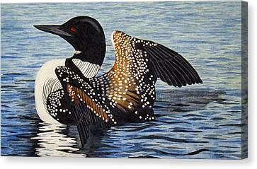 Loon In Flight Canvas Print by Brenda Brown