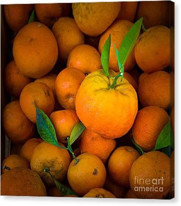 L'orange Canvas Print by Inge Johnsson