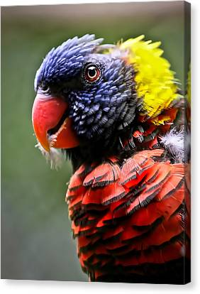 Lorikeet Bird Canvas Print by Athena Mckinzie