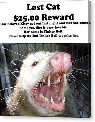 Lost Cat Cash Reward Canvas Print by Michael Ledray