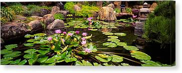 Lotus Blossoms, Japanese Garden Canvas Print by Panoramic Images