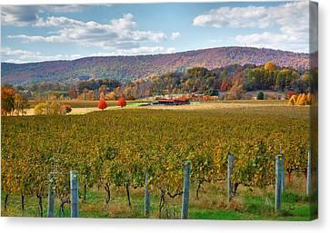 Loudon County Vineyard II Canvas Print by Steven Ainsworth