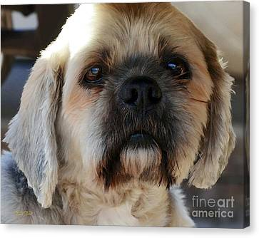 Louie Canvas Print by Dale   Ford