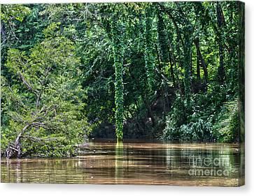 Louisiana Bayou Toro Creek Swamp Canvas Print by D Wallace