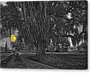 Louisiana Moon Rising Monochrome 2 Canvas Print by Steve Harrington