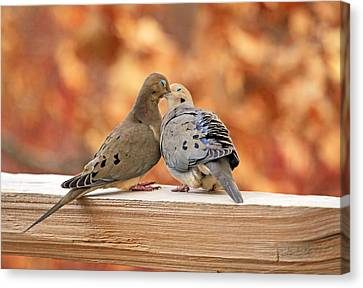 Love Birds Canvas Print by Donna Kennedy