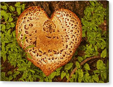 Love Of Nature Canvas Print by Jack Zulli