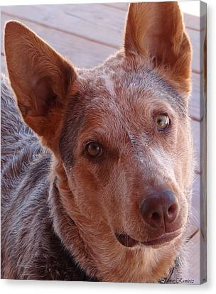 Love Of The Cattle Dog Canvas Print by Jamie Ramirez