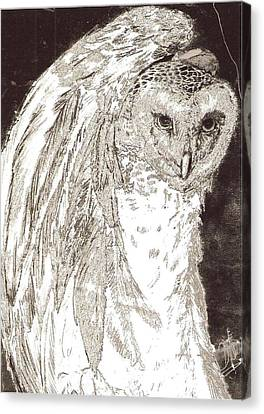 Love Owl Canvas Print by George Harrison