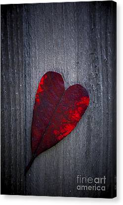 Love Canvas Print by Svetlana Sewell