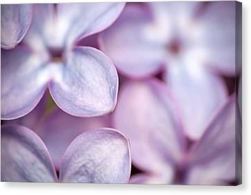 Lovely Lilacs Canvas Print by Peggy Collins