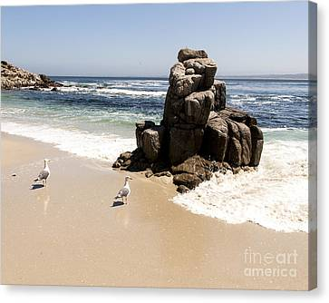 Lovers Point Seagulls Canvas Print by Juan Romagosa