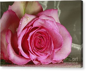 Loves Tender Moments Canvas Print by Inspired Nature Photography Fine Art Photography