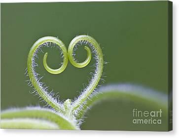 Loving Nature Canvas Print by Maria Ismanah Schulze-Vorberg
