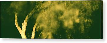 Low Angle View Of A Tree Blowing Canvas Print by Panoramic Images