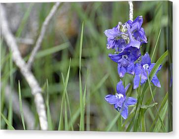 Low Larkspur In Yellowstone National Park Canvas Print by Bruce Gourley
