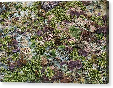 Low Tide, Misool Island, Raja Ampat Canvas Print by Jaynes Gallery