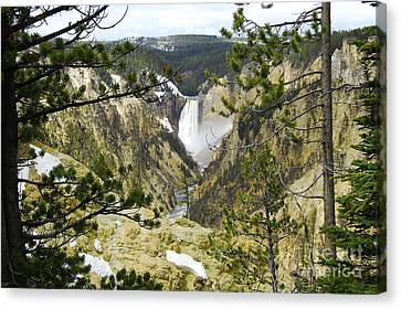 Lower Falls From Artist Point Yellowstone National Park Canvas Print by Shawn O'Brien