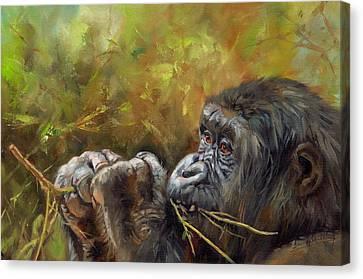 Lowland Gorilla 2 Canvas Print by David Stribbling