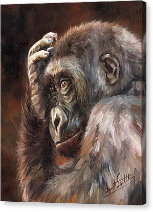 Lowland Gorilla Canvas Print by David Stribbling