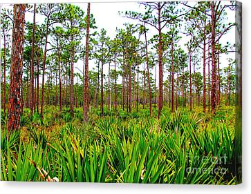Loxahatchee Canvas Print by Carey Chen