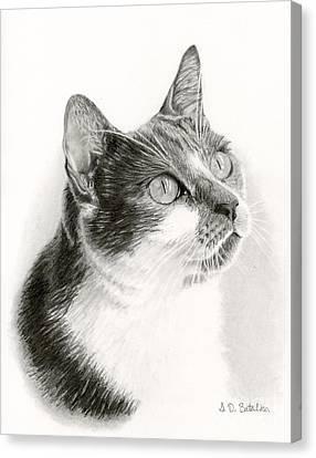 Lucy Canvas Print by Sarah Batalka