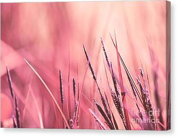 Luminis - S09c - Pink Canvas Print by Variance Collections