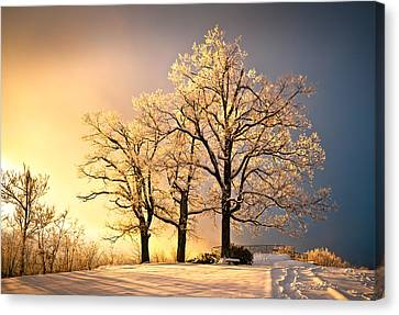 Luminous - Blue Ridge Winter Sunset Canvas Print by Dave Allen