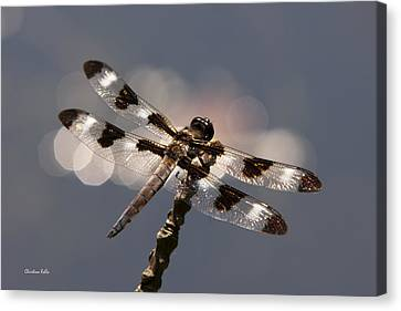Luminous Dragonfly Canvas Print by Christina Rollo