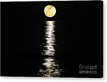 Lunar Lane Canvas Print by Al Powell Photography USA