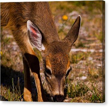 Lunchtime In The Forest Canvas Print by Jordan Blackstone