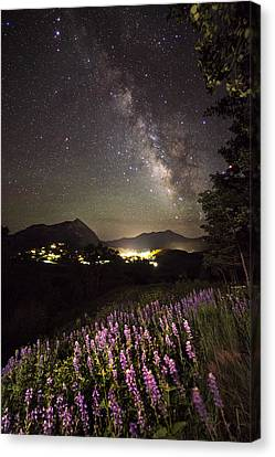 Lupine Blanket Under The Stars Canvas Print by Mike Berenson