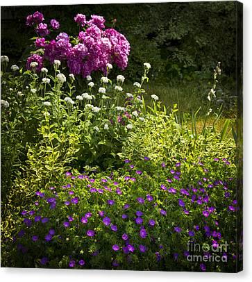Lush Blooming Garden  Canvas Print by Elena Elisseeva