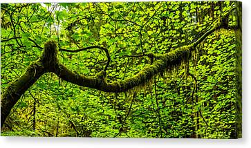Lush Canvas Print by Chad Dutson