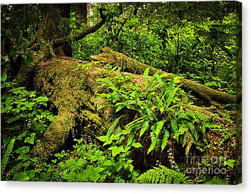 Lush Temperate Rainforest Canvas Print by Elena Elisseeva