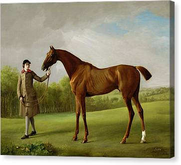Lustre Held By A Groom Canvas Print by George Stubbs