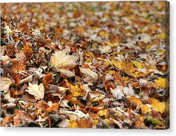 Lying On The Ground Canvas Print by Ester  Rogers