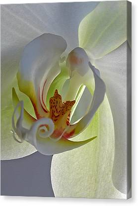 Macro Photograph Of An Orchid  Canvas Print by Juergen Roth