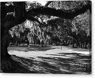 Made In The Shade  2 Canvas Print by Mel Steinhauer