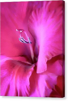 Magenta Splendor Gladiola Flower Canvas Print by Jennie Marie Schell