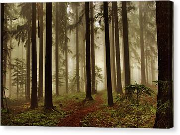 Magic Forest Canvas Print by Jose Carlos Fernandes De Andrade