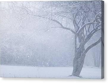 Magic Of The Season Canvas Print by Carrie Ann Grippo-Pike