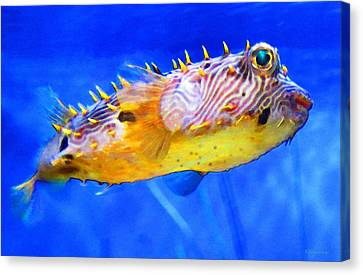 Magic Puffer - Fish Art By Sharon Cummings Canvas Print by Sharon Cummings