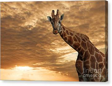 Magical Savanna Canvas Print by Pete Reynolds