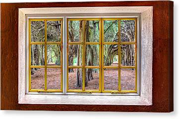 Magical Trees Canvas Print by Semmick Photo