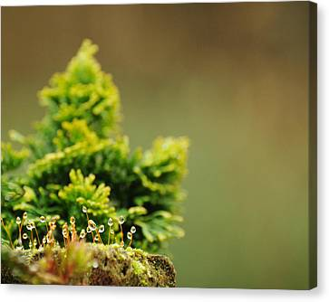 Magical World Of Green And Gold Canvas Print by Rebecca Sherman