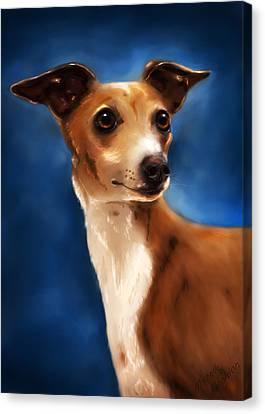 Magnifico - Italian Greyhound Canvas Print by Michelle Wrighton